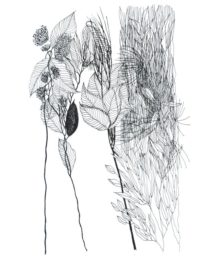 Kishore-Untitled-Ink on Paper-10 x 13inches (6)