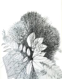 Kishore-Untitled-Ink on Paper-10 x 13in (3)